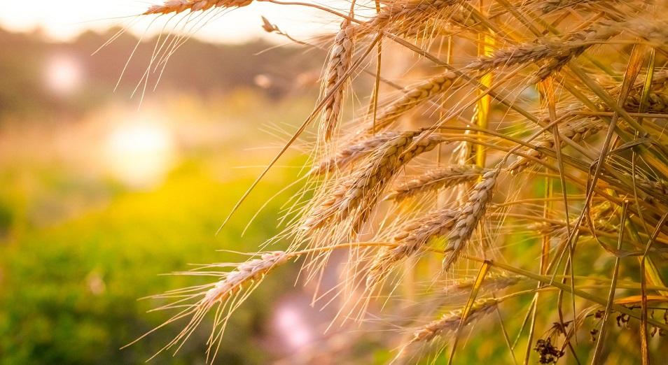 Казахстан может заработать: в Иране возникла потребность в импорте 5 млн тонн пшеницы