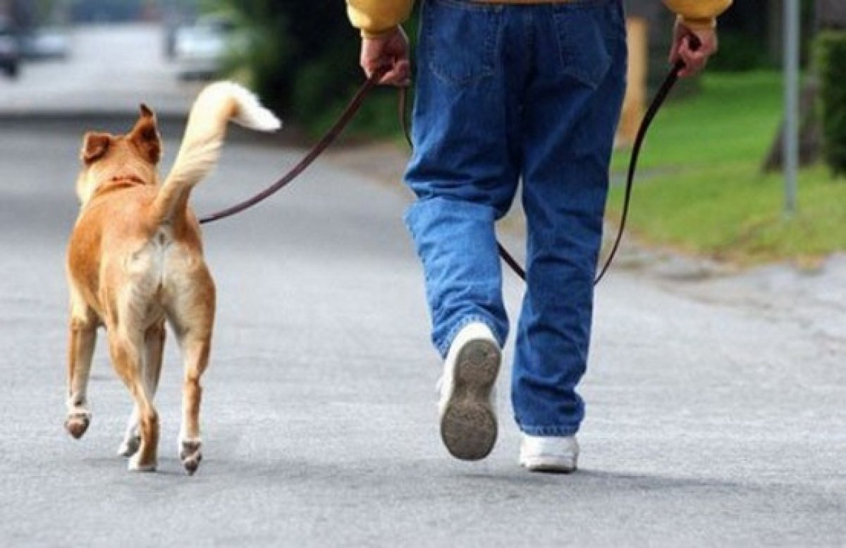 За нарушение правил содержания собак и кошек к адмответственности привлекли почти 300 человек в Нур-Султане