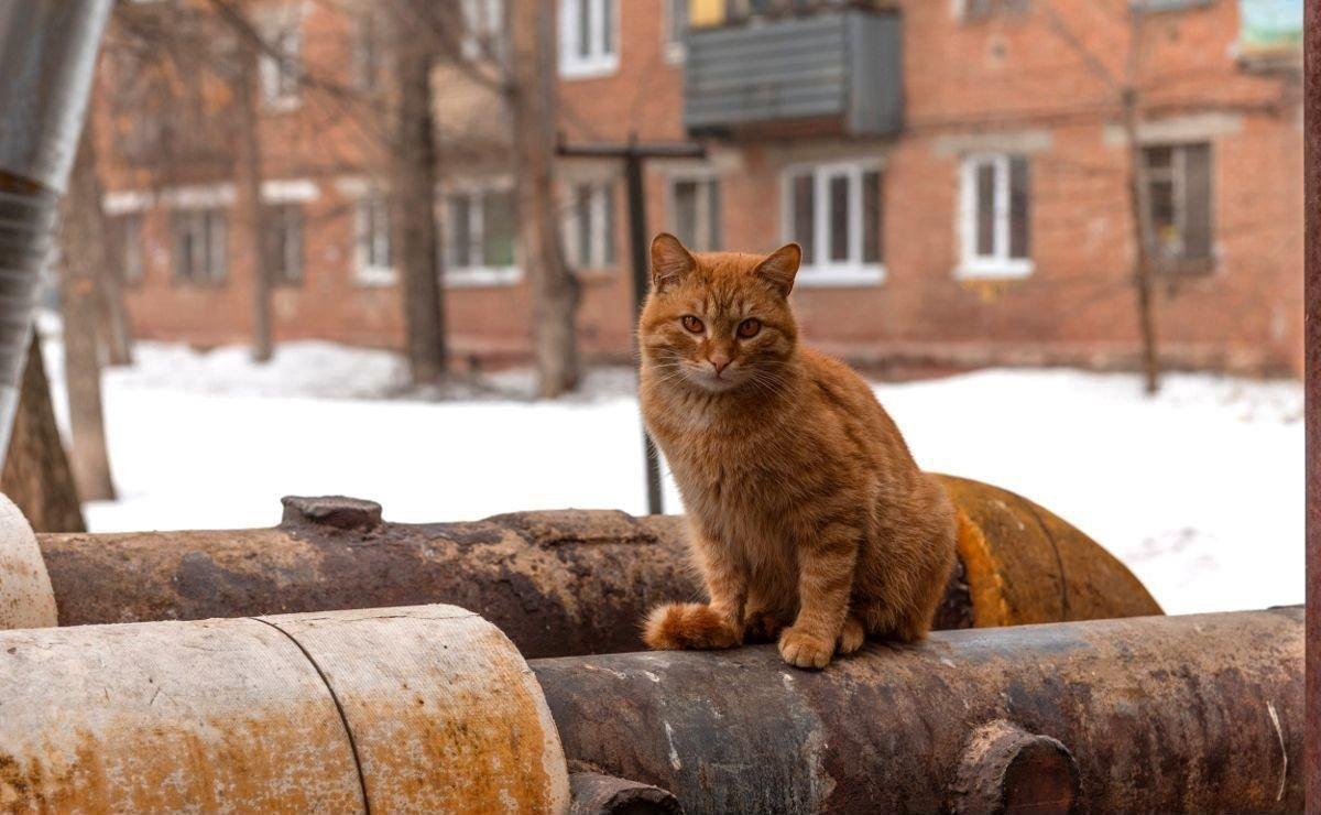 В России измерили изношенность теплотрасс в кошках
