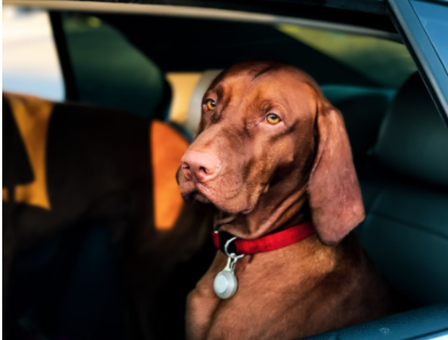 США запретили ввозить собак из Казахстана
