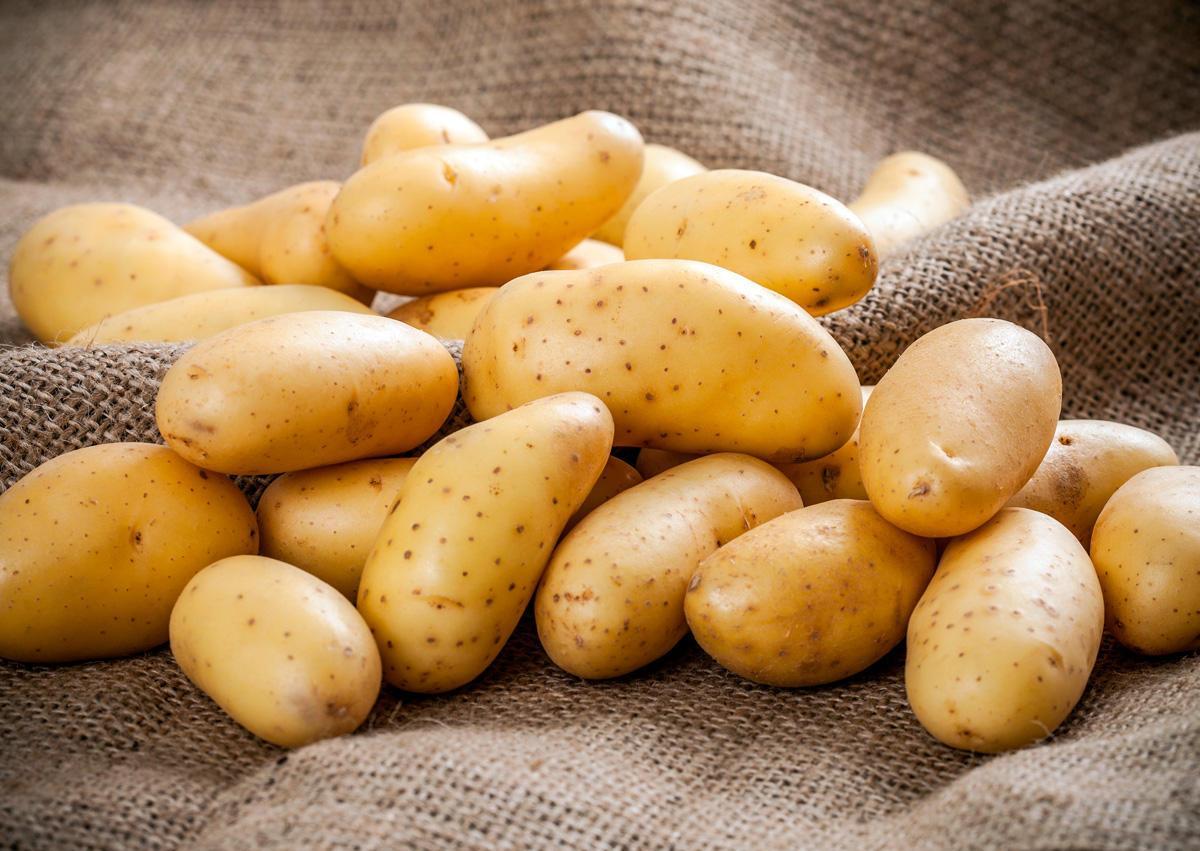 Вывоз картофеля из Казахстана сократился более чем в два раза