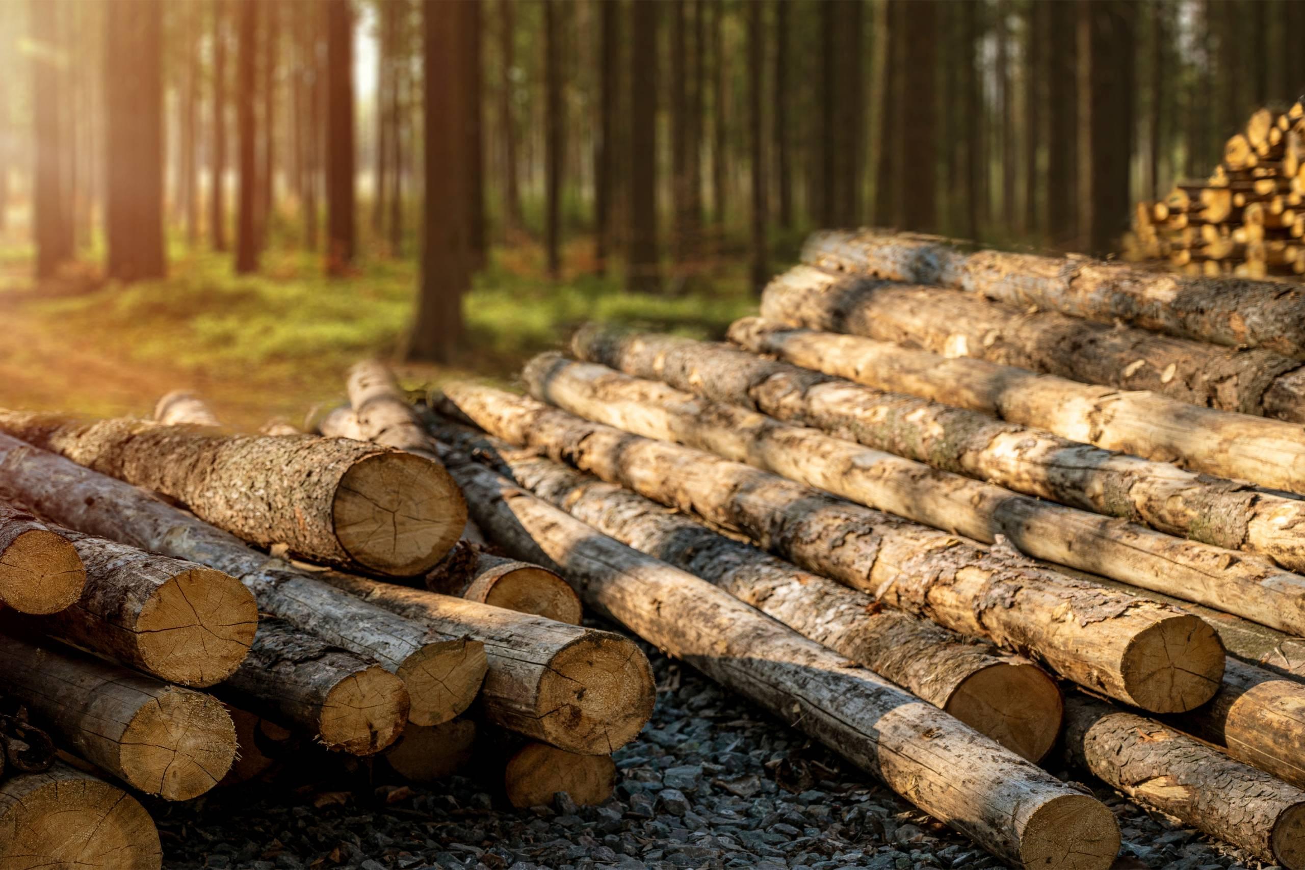 Казахстан вводит запрет на вывоз лесоматериалов