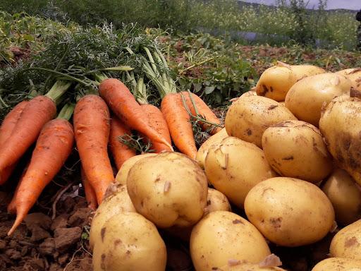 Горы выброшенных овощей сняли на видео в Павлодарской области