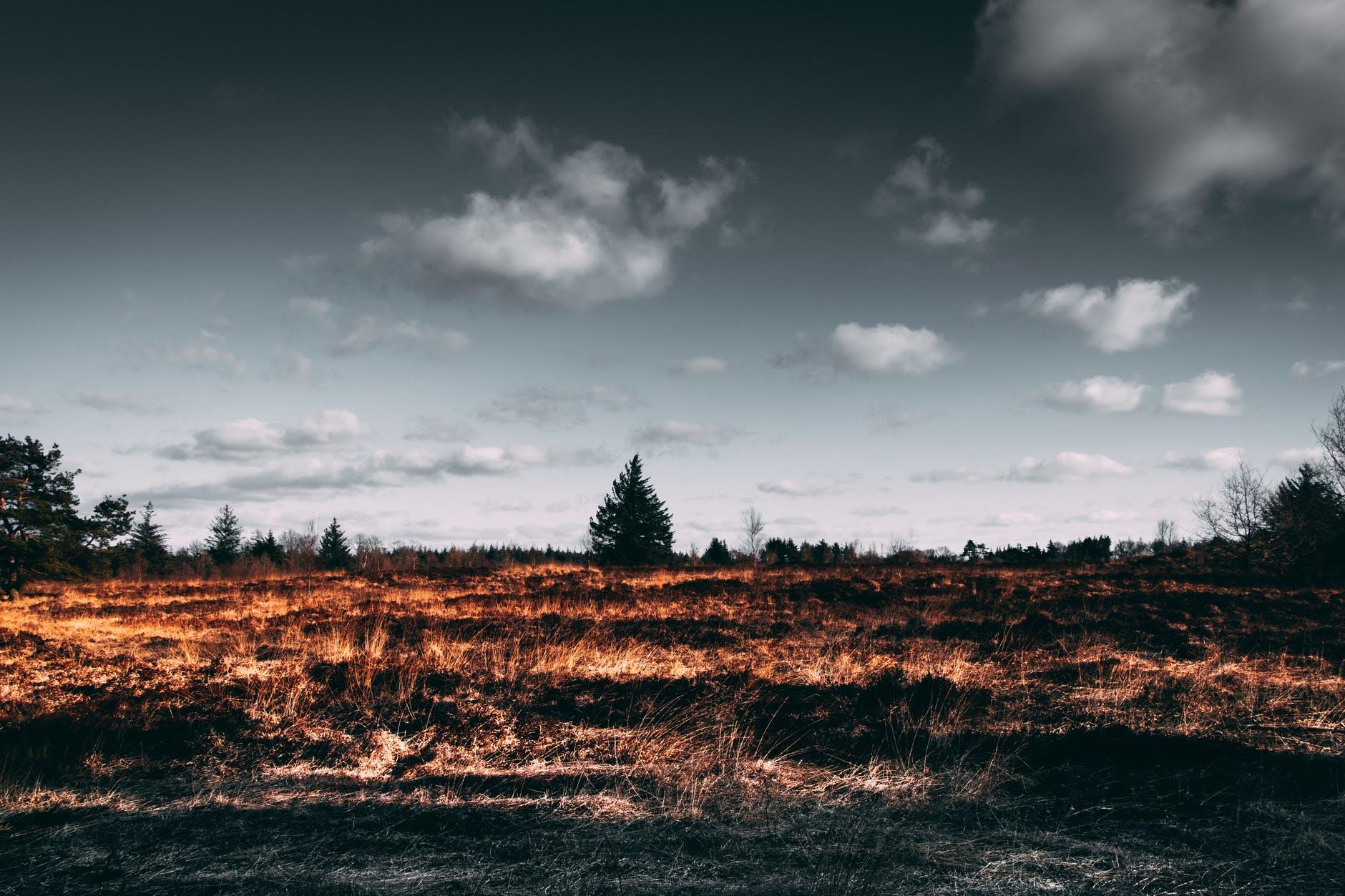 Со степными пожарами несколько дней борются в Карагандинской области