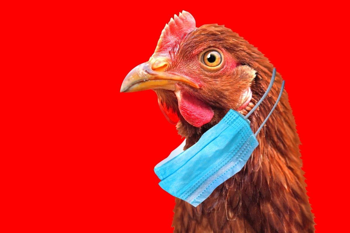 Североказахстанское село охватил птичий грипп