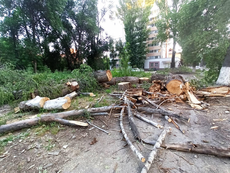 В Семее незаконно спилили деревья ради парковки
