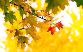 Прогноз погоды на 19 октября: тепло сохраняется на большей части территории Казахстана