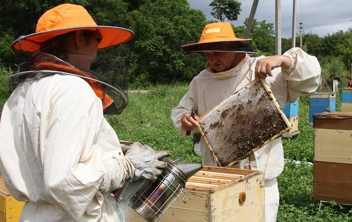 Овцеводов и пчеловодов соберут в кооперативы