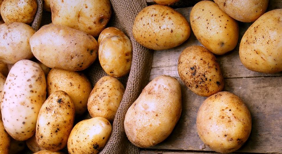 Яйца упали, а картошка подросла