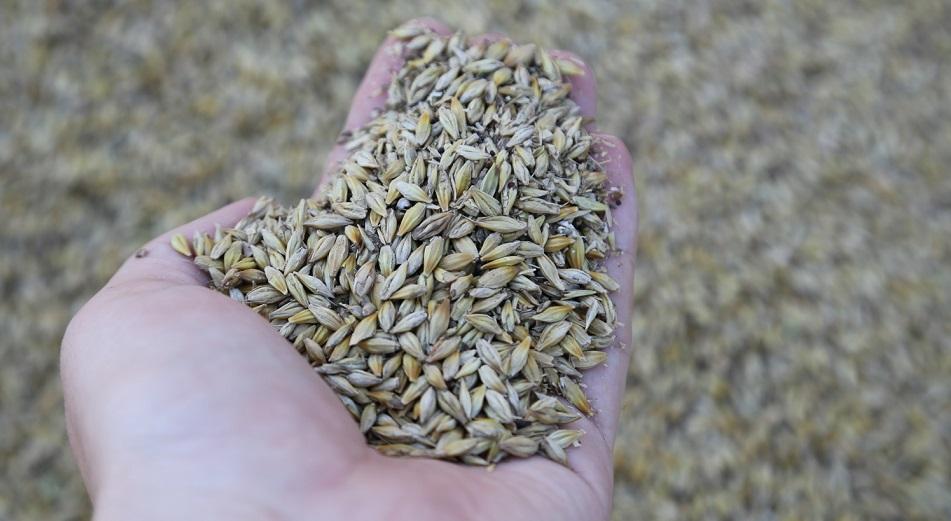 Казахстан ждет 19,5 миллиона тонн зерна нового урожая