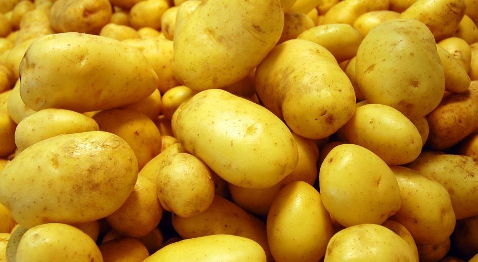 Костанайцы заявили о росте себестоимости своего картофеля