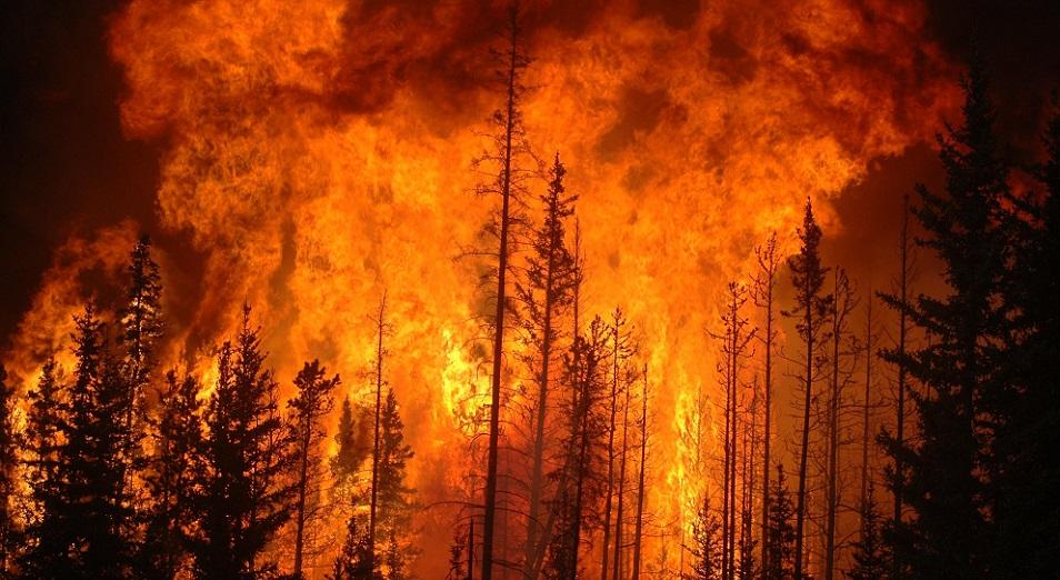 МВД РК: «Леса горят – пожарных не хватает»