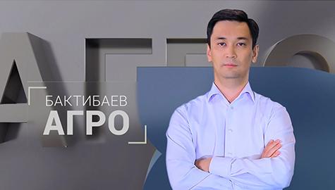 Бактибаев. Агро
