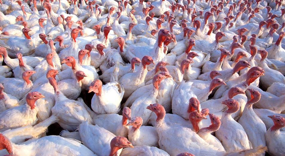 НПП «Атамекен» и бизнес-омбудсмен отстояли птичьи права
