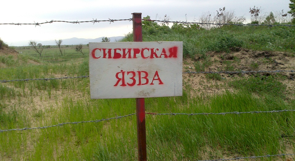 Сибирская язва ближе африканской чумы