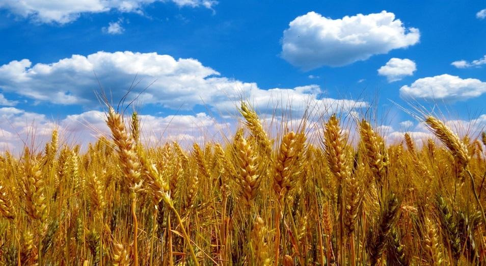 Пшеница и мука остаются лидерами экспорта