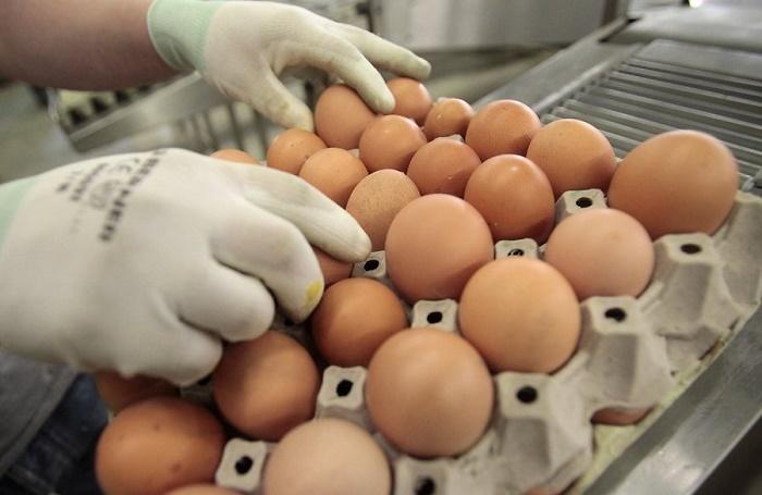 Цены на яйцо задают торговые сети