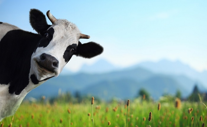 Экспорт мяса возобновится