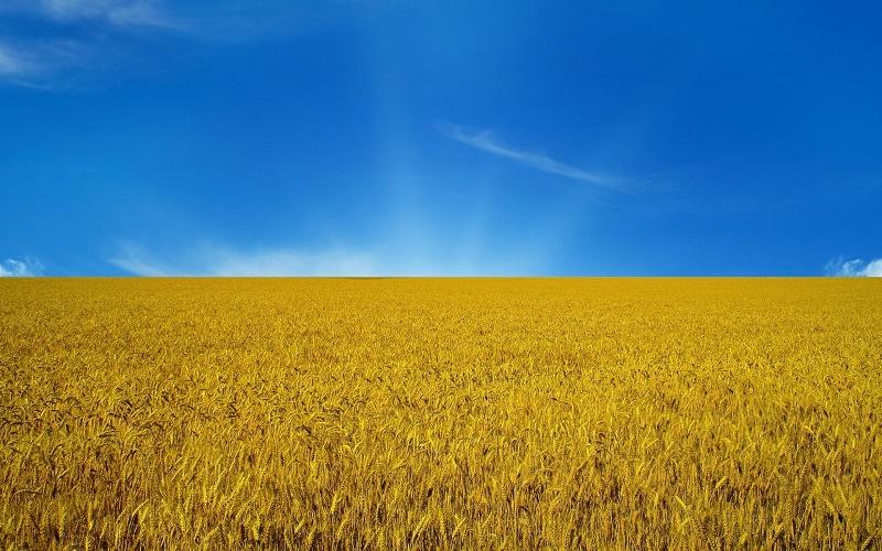 В ЗКО урожайность зерновых упала в два раза