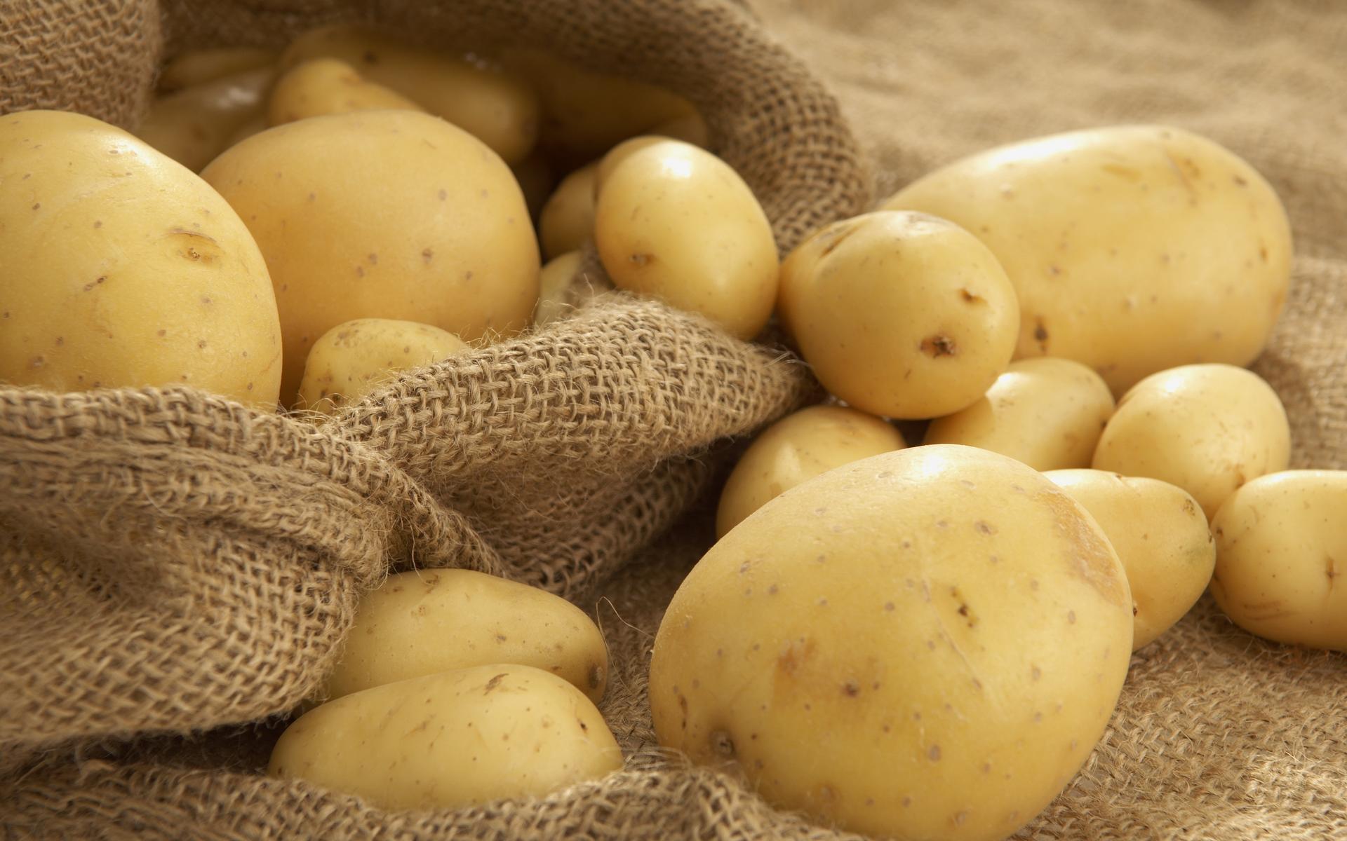 Высокий урожай картофеля собрали актюбинские аграрии