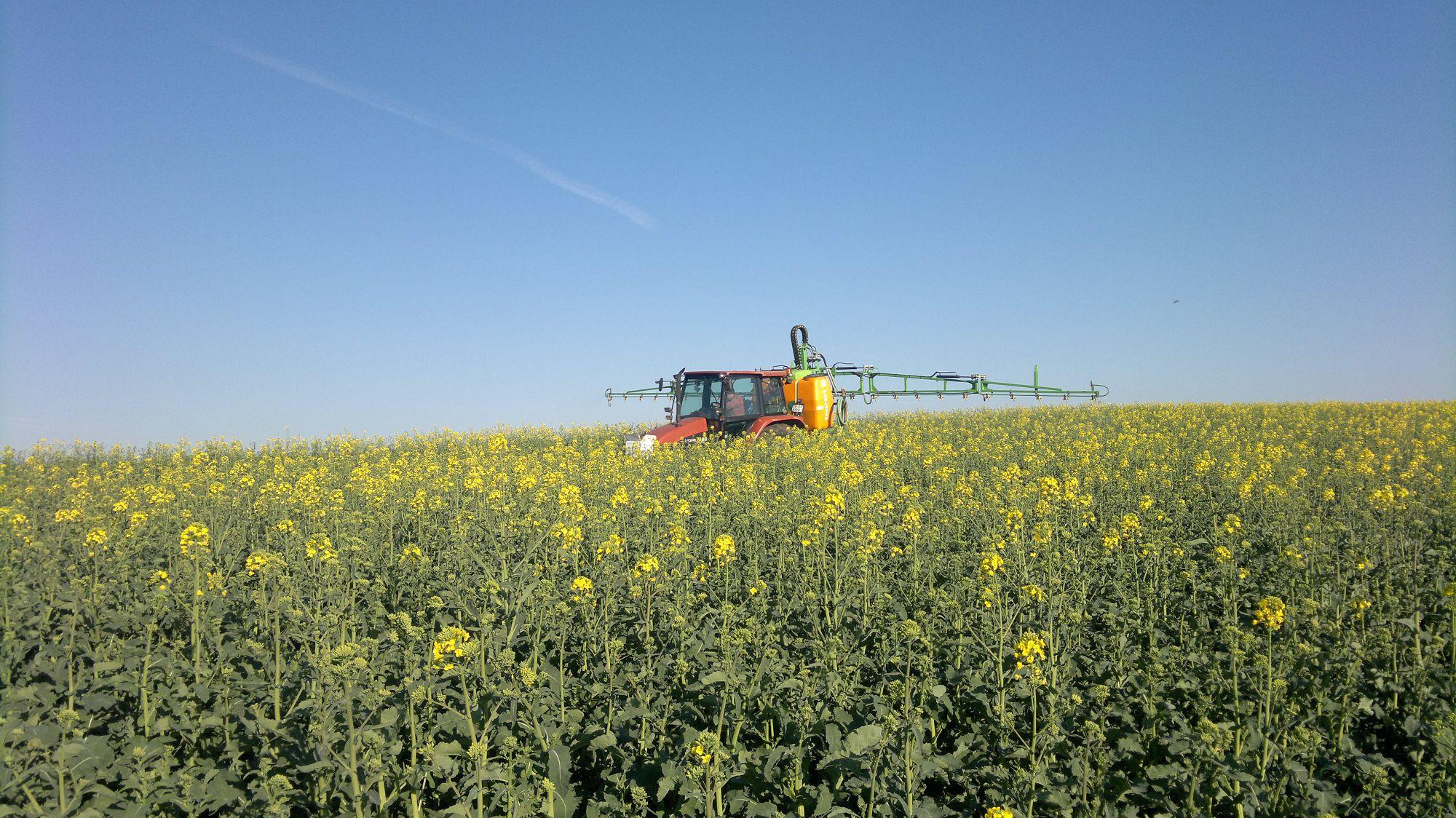 Лён и рапс убирают фермеры Северного Казахстана