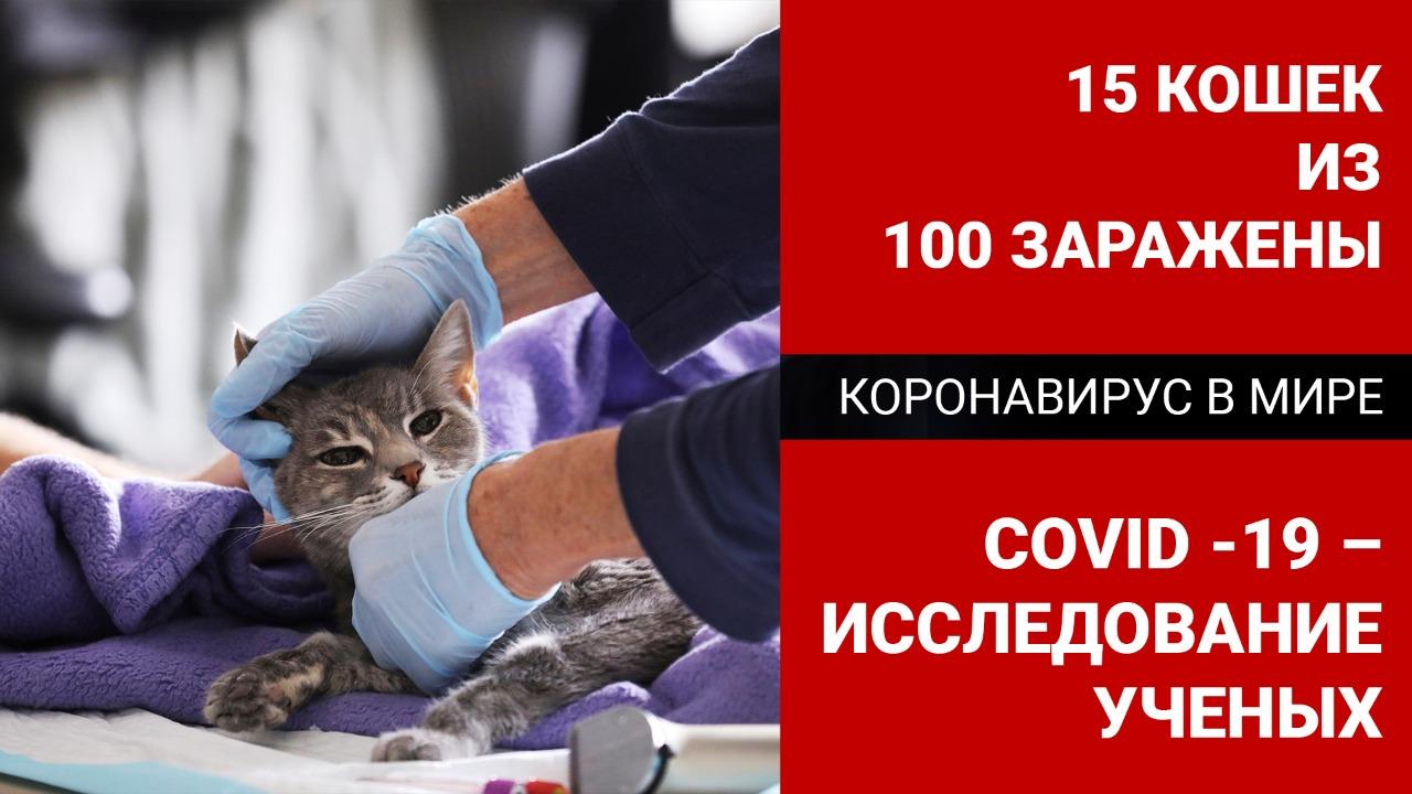 Коронавирус в мире: 15 кошек из 100 заражены COVID-19 – исследование ученых
