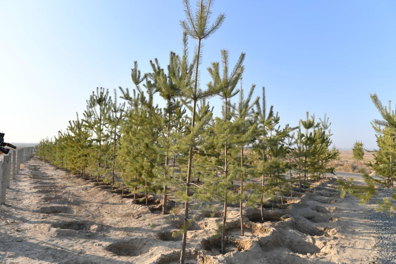 В Туркестане высадят более 4 млн саженцев к 2023 году