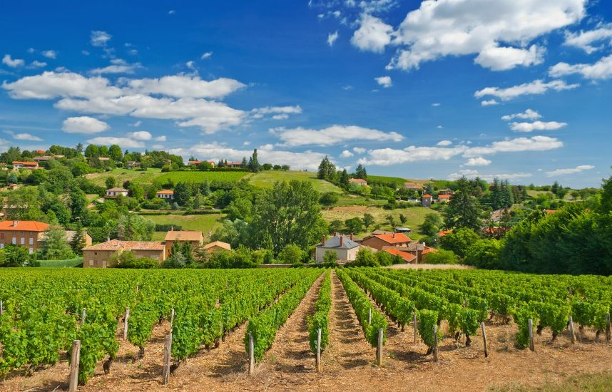 Град убил виноградники во французском Божоле