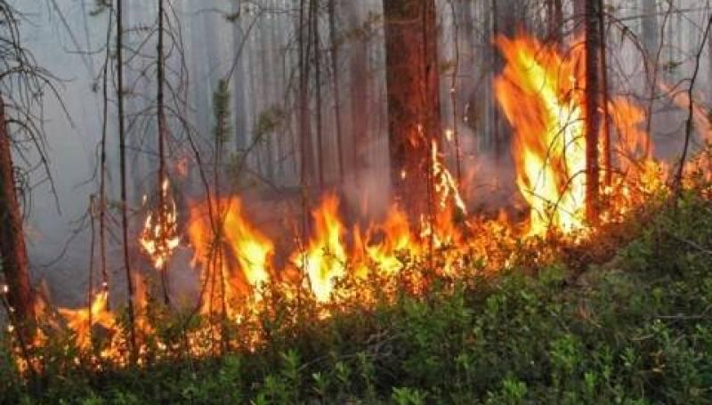 Пожарные продолжают тушить очаги огня в природном резервате в ВКО