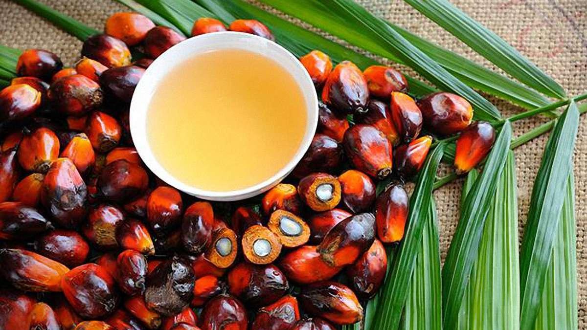 Депутаты требуют ввести 20%-ную пошлину на ввоз пальмового масла