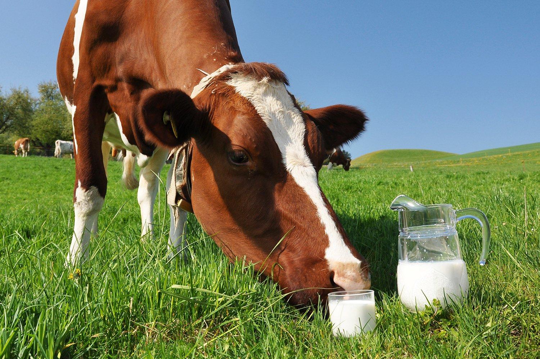 Новую молочно-товарную ферму презентовали в Павлодарском районе