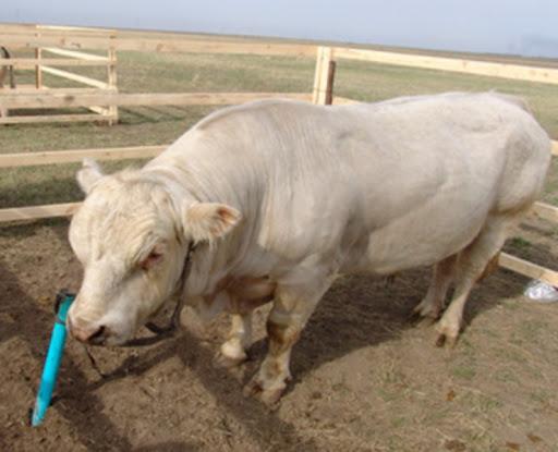 Фермеры пожаловались на нехватку субсидий