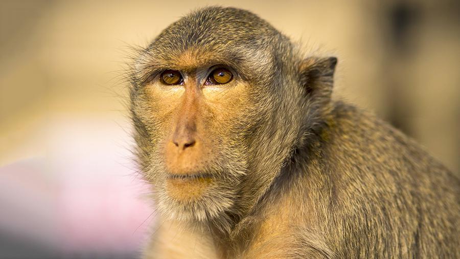 Жительницу Челябинской области будут судить за контрабанду обезьян из Казахстана