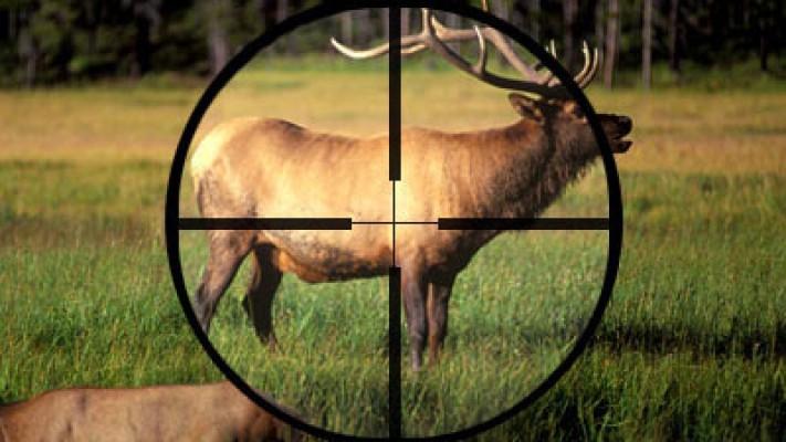 Наказание за браконьерство намерены ужесточить в Казахстане
