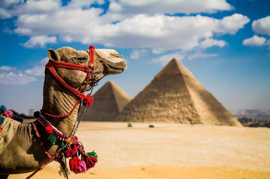 В Египте начали преподавать казахский язык как специальность