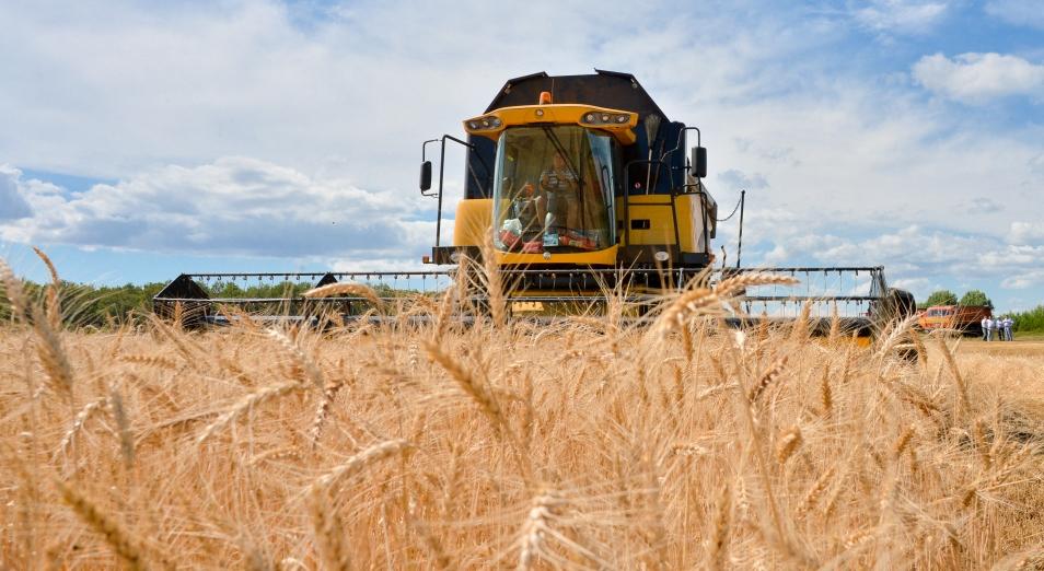 В ВКО отмечают повышение урожая зерновых, рапса и картофеля
