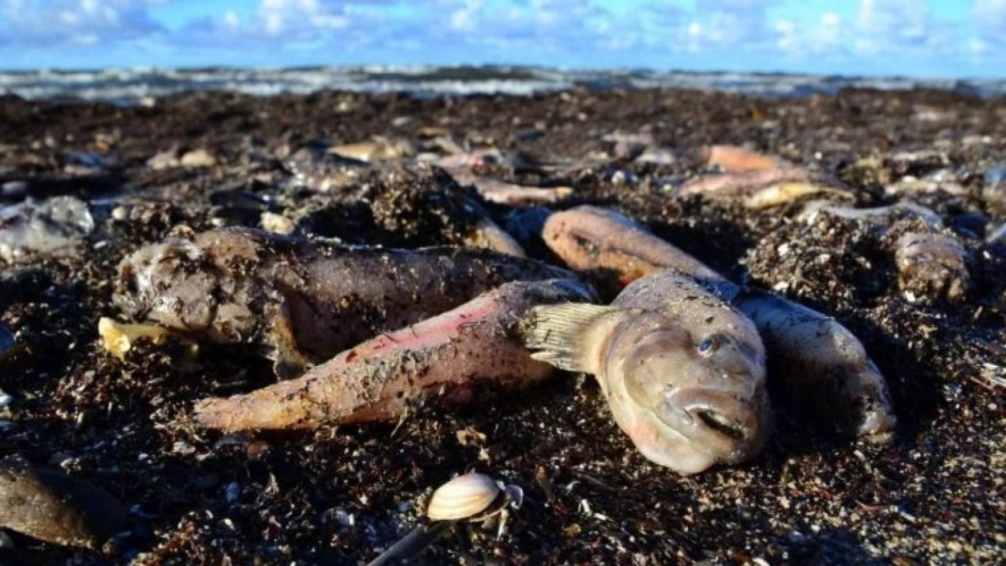 Стала известна причина гибели почти двух тонн рыбы в водоеме Алматинской области