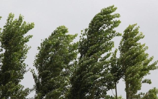 Қызылорда облысында Арыстанды-Қарабастың бораны басталды