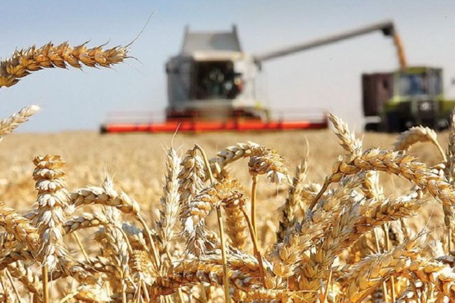 В Казахстане убрано 94% зерновых