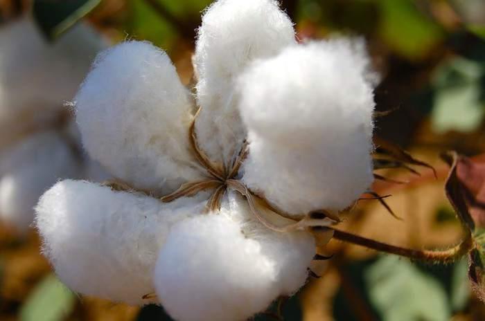 В Казахстане производство хлопчатобумажных тканей выросло на 11%