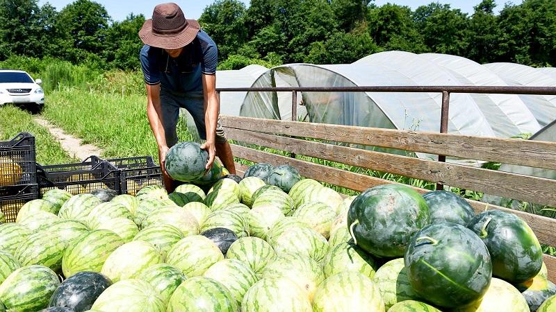 В Казахстане потери урожая овощей и фруктов составляют 19%