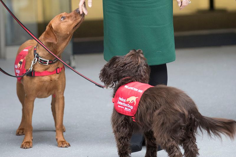 Собак для распознавания заразившихся COVID-19 могут начать использовать в аэропорту Хельсинки