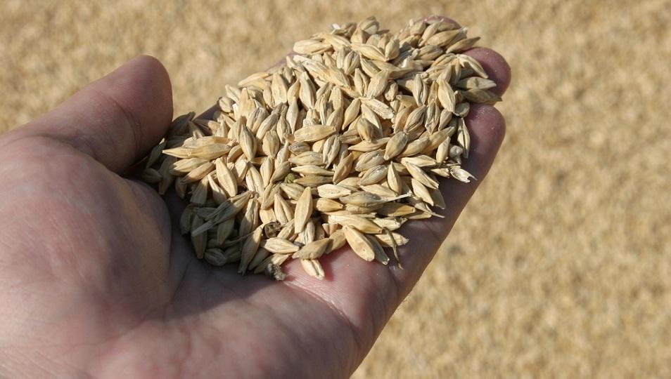 Потенциал по экспорту зерна Казахстаном составляет до 6 млн тонн