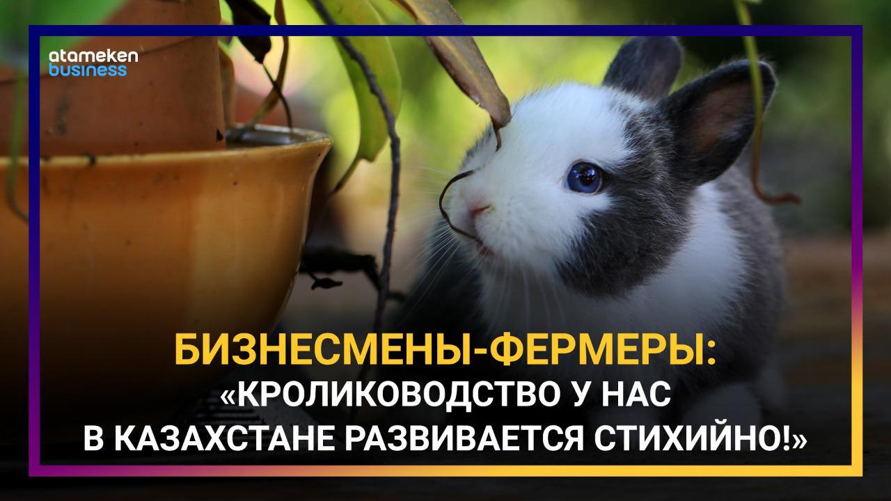 Казахстанское кролиководство не развивается из-за отсутствия господдержки?
