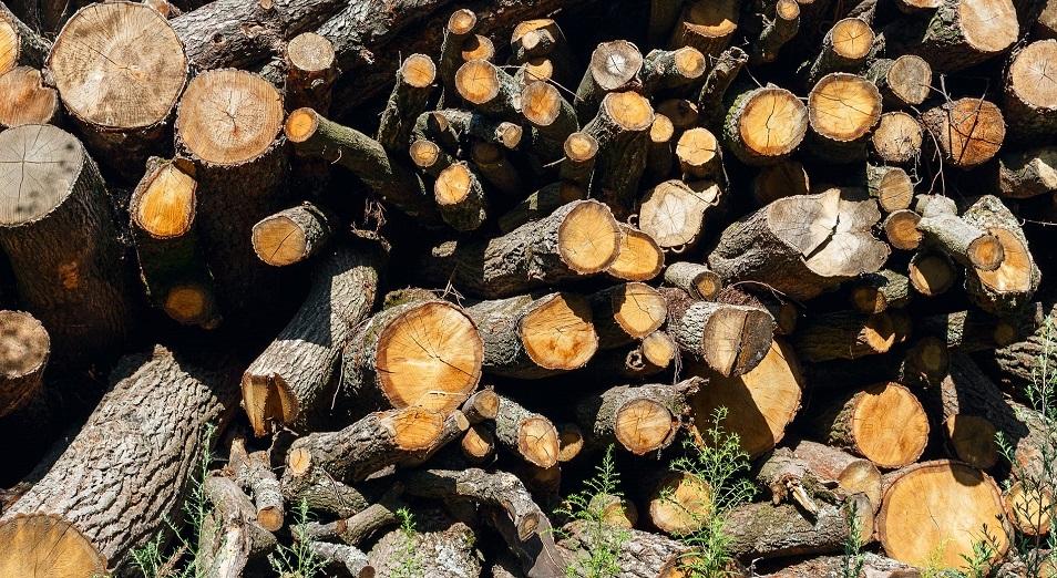 Скандал с массовой вырубкой деревьев в Усть-Каменогорске разрешен в суде