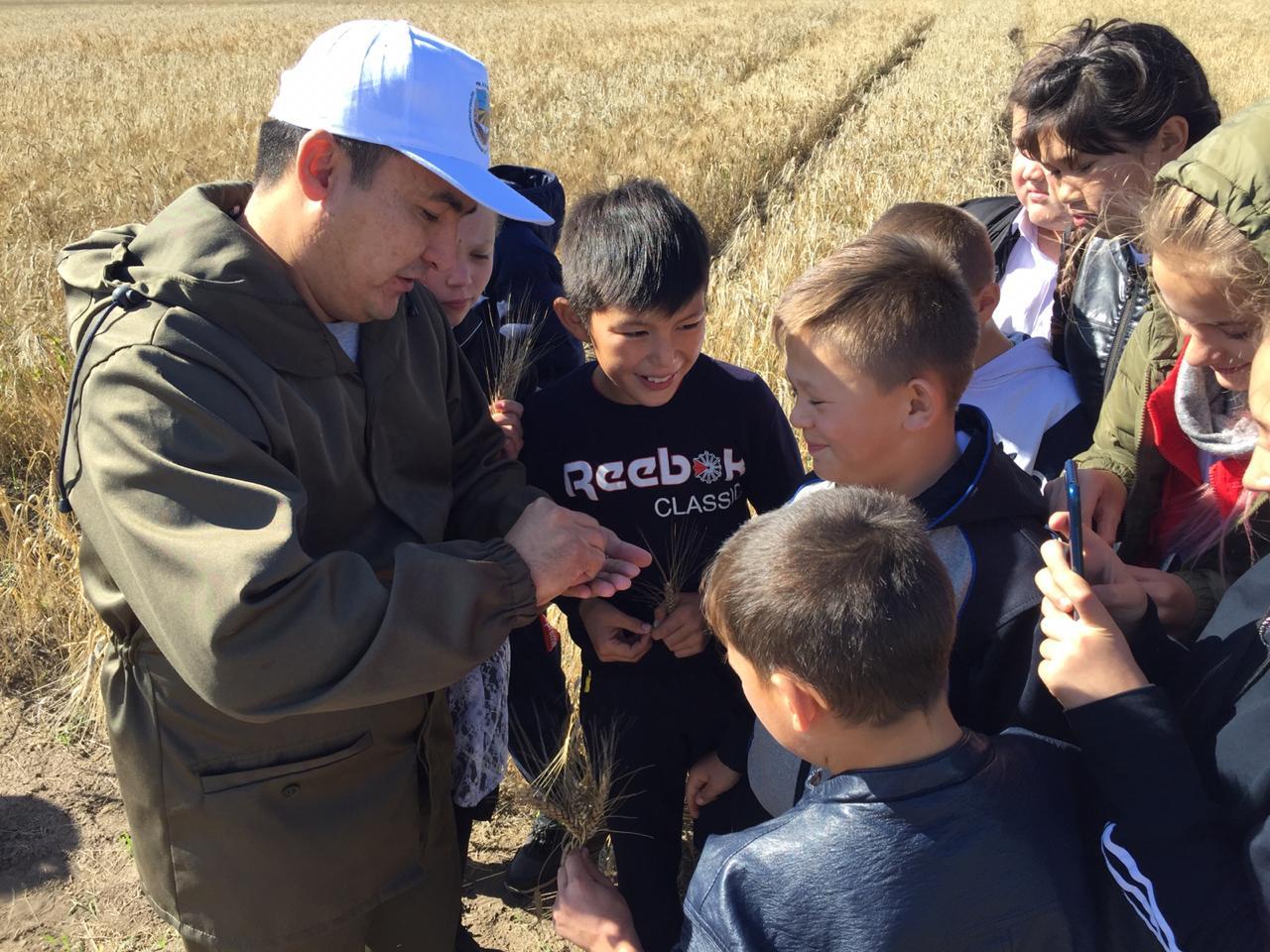Мектеп оқушылары ашық сабақты астық алқабында өткізді