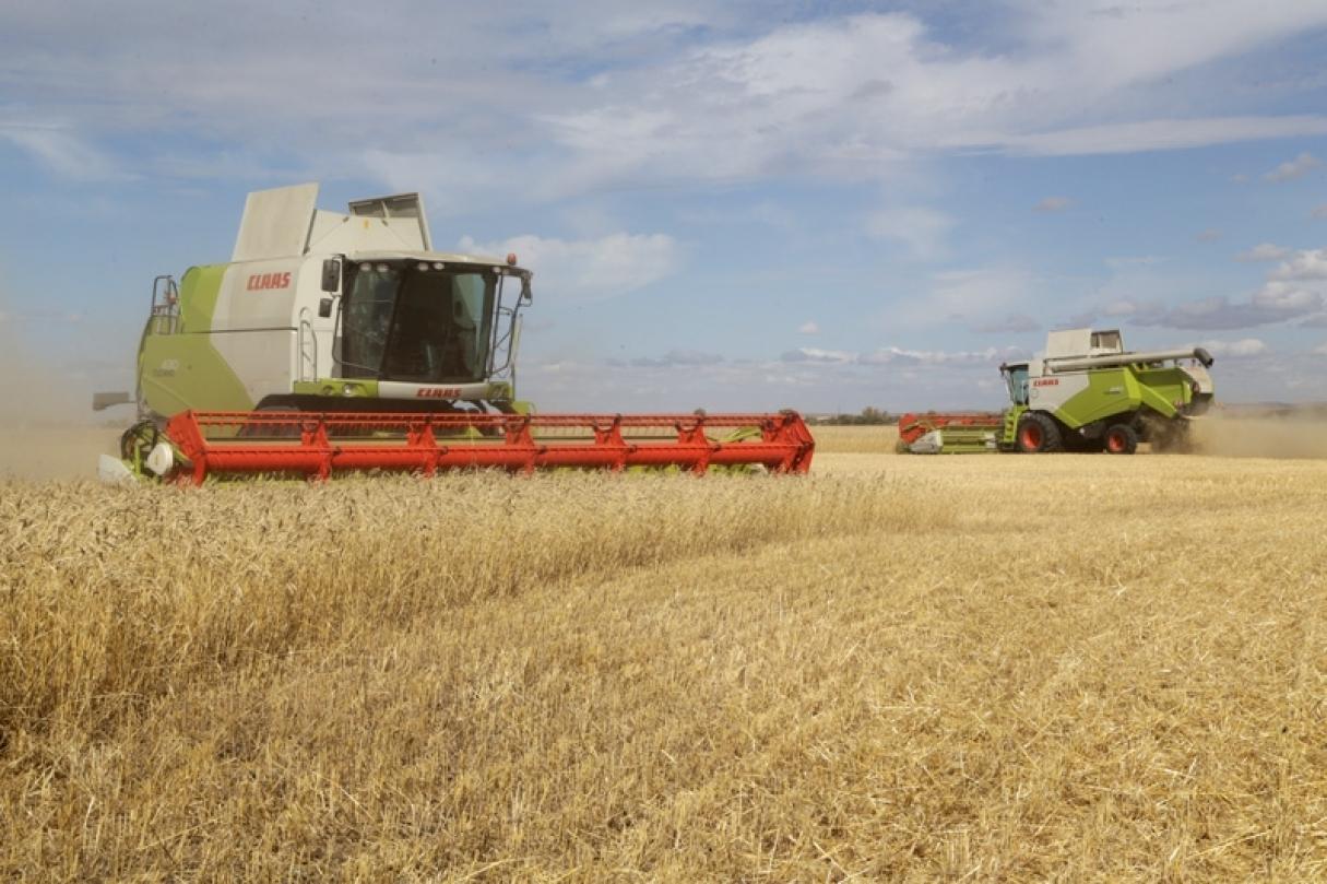 Казахстанские аграрии к 4 октября убрали более 88% площадей зерновых