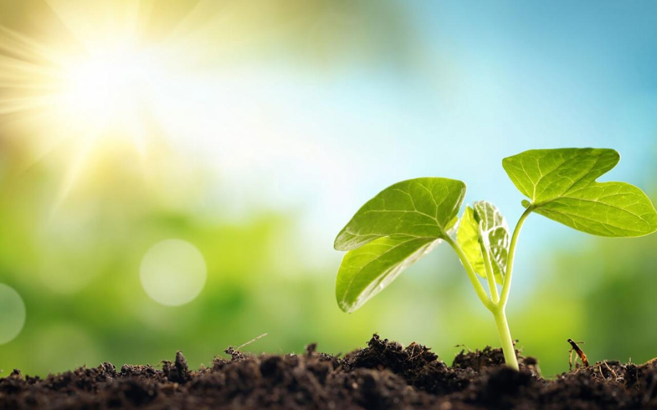 Время восстанавливать отношения человека с природой и биоразнообразием