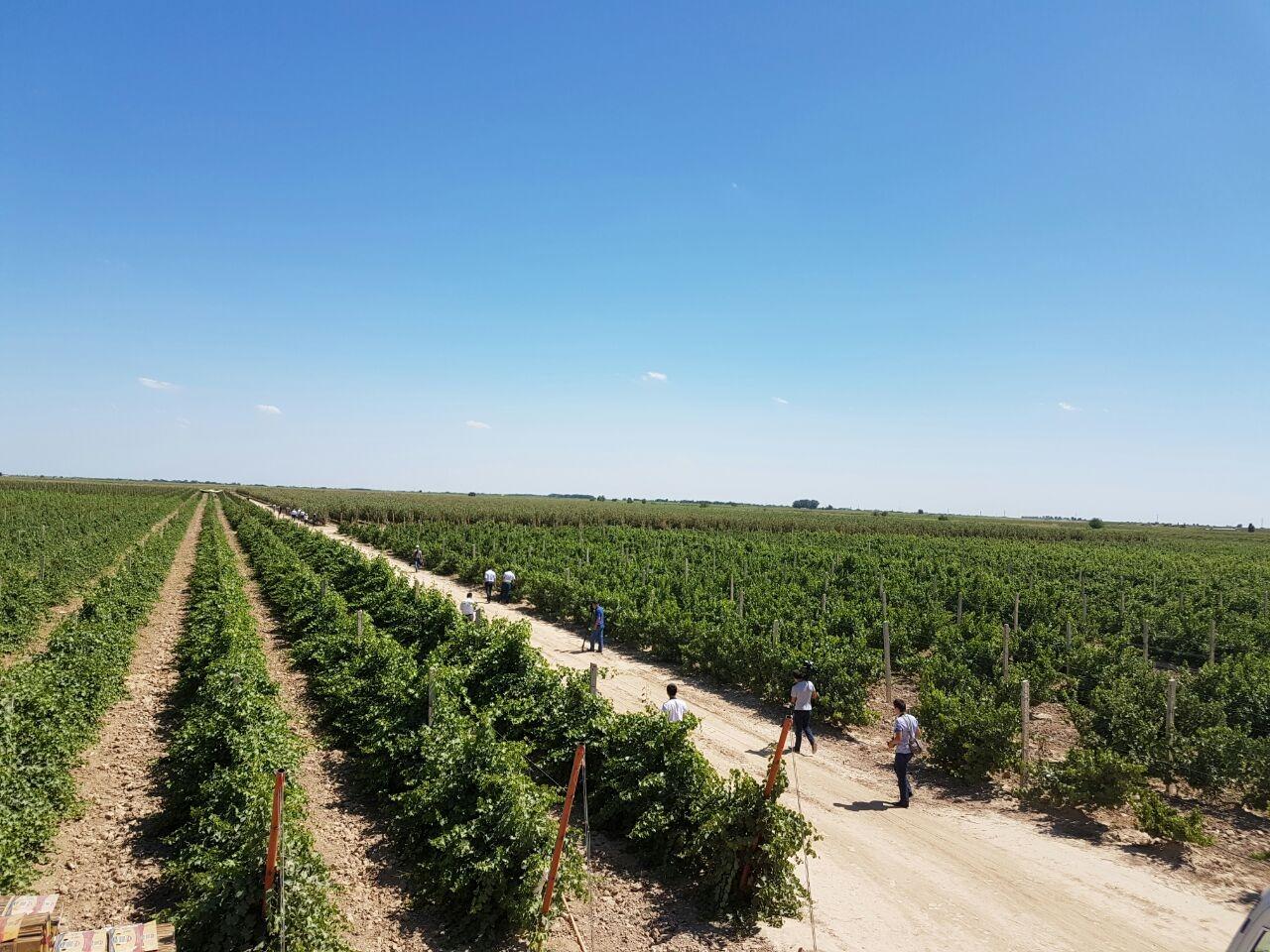 В Мактааральском районе объём сельскохозяйственной продукции достиг 42 млрд тенге