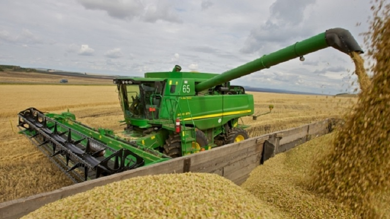 Экспортный потенциал зерна составит 7,5-8 млн тонн